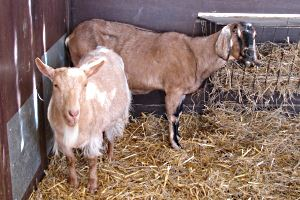 The Monty Hall Problem - It can really get your goat!